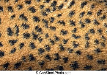 Fake Animal Fur - Close up view of fake animal fur on...