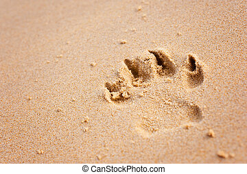 close up of a dog's pawprint on the beach
