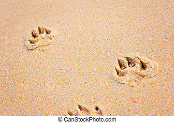 pawprints on the beach horizontal