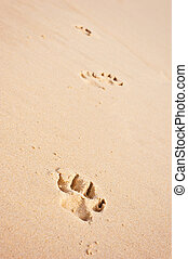 pawprints on the beach vertical