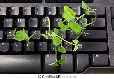 Keyboard with Sprouts on White Background