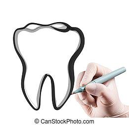 hand drawing a teeth