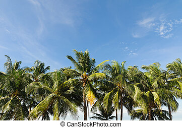 Coconut tree on blue sky in thailand