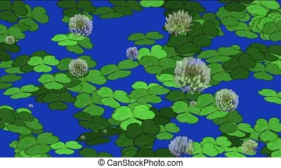 clover and dandelion - clover dandelion