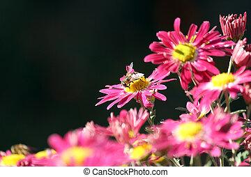 bee on flower spring scene
