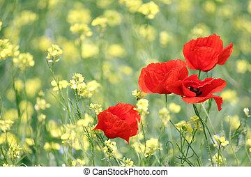 poppy flowers spring scene