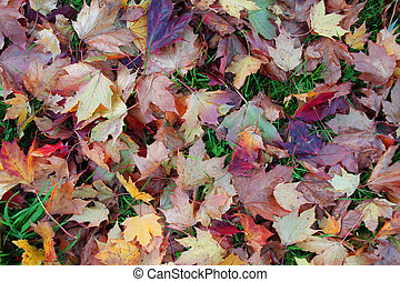 leaves background - A background texture full of autumn...