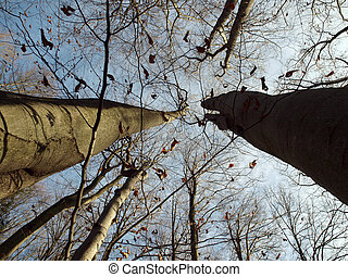 Last leaves fall from trees