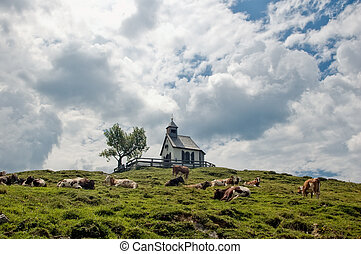 Chapel and Cows on the hilltop, taken in Austria