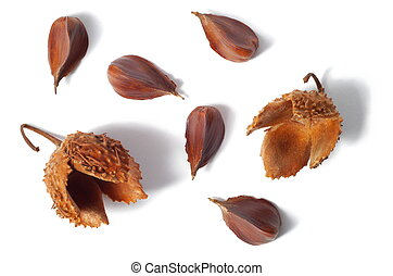 Common Beech Nuts - Nuts of common beach tree isolated on...