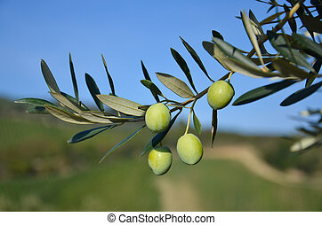 Olive branch with its Mediterranean fruits