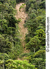 Landslide and erosion in jungle of Ecuador, green trees with...