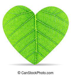 Heart green leaves