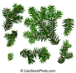 Fir twigs white background - Fir twigs from the top on a...