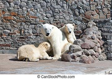 White polar she-bear with bear cubs