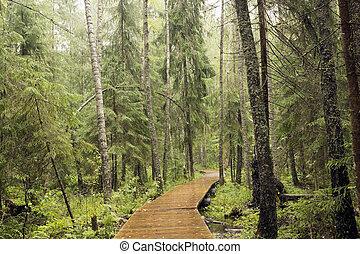 Foot path over a bog.