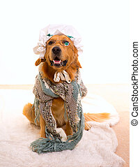Wolf dog dressed as grandma golden retriever as Baby Little...