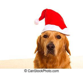 Golden retriever dog with Christmas Santa red hat - Golden...