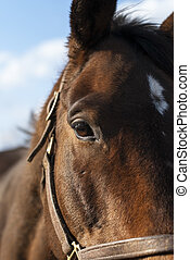 Closeup Portrait Of A Horse