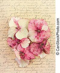 Hydrangea flower petals - Pink hydrangea flower petals on an...