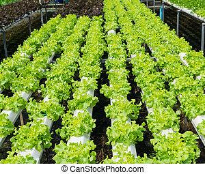 organique, hydroponic, légume, jardin