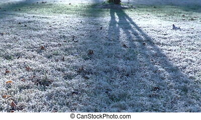frost - Time lapse of frosty grass thawing