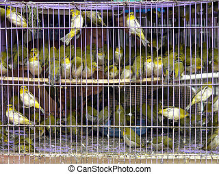Birds in a cage, Hanoi, Vietnam