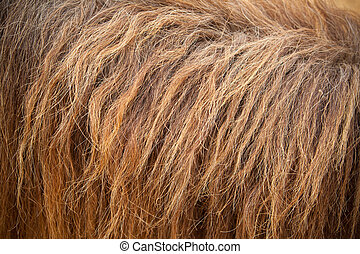 horse fur - close up of brown horse fur as background