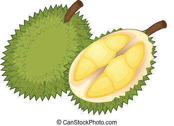 Fruit illustration - Illustration of friut on a white...