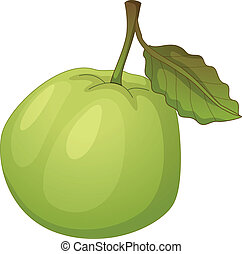 Fruit illustration - Illustration of friut on a white...