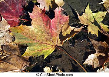 Colorful leaves lying in wate