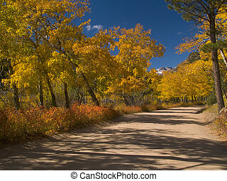 Autumn Journey - Road to the Fern Lake Trail, Rocky Mountain...