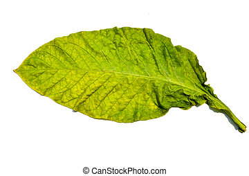 Tobacco Leaf Of Thailand
