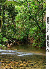 Travelling the Daintree National Park - Daintree National...