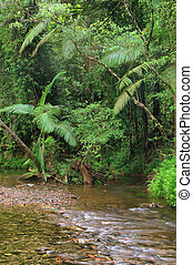 Travelling the Daintree National Park