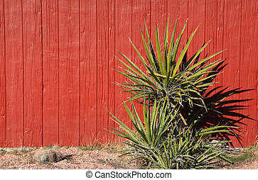 Yucca plant against red barn wall background