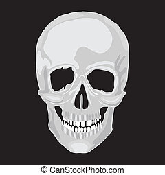 Human skull model. Vector object scull illustration. People...