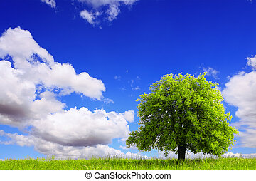 Spring landscape with green tree