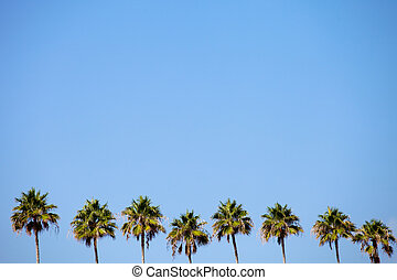 Tropical Palm Trees Row - A row of palm trees over a blue...