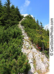 Trail To The Mountain Peak - A rocky trail to the peak of...