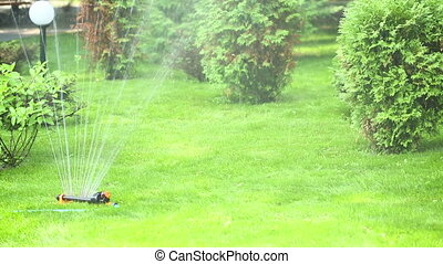 Automatic watering.