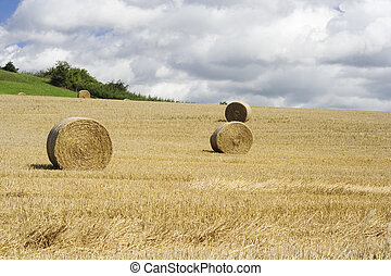 Haymaking - Hay bales drying in the field at harvest time.