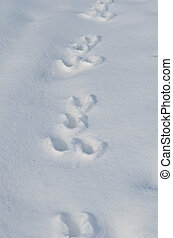 Traces of a hare on the snow - Traces of a hare on a white...