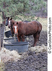 Horse's at the feeders - Three Horse's eating at the...