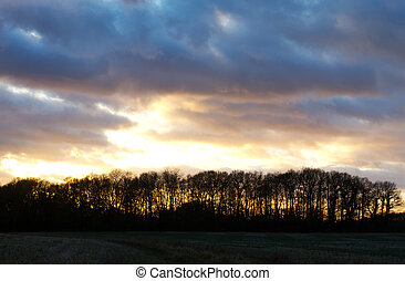 sunset over trees in an english field