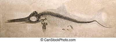 Ichthyosaur - Museum quality cast of a Lower Jurassic...