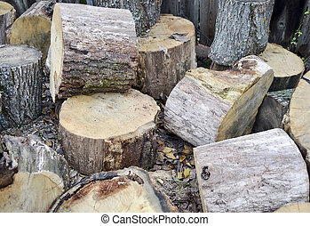 firewood - The photo shows several stumps trees for...