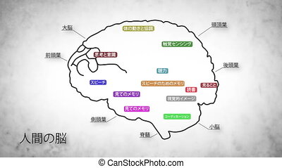 Human Brain 02 Japanese - The human brain structure...