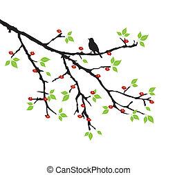 tree branch - vector tree branch with bird