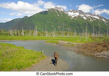 Moose in Girdwood, Alaska